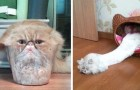 These photos prove without a doubt that cats are made of liquid material