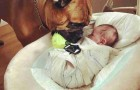 The way this dog takes care of his little human will fill your heart with tenderness ...