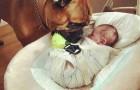 El modo en que este perro se toma cuidado de su pequeño humano nos llenara el alma de dulzura