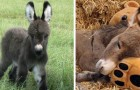 These cute little donkeys will be the sweetest thing you'll see today