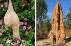 10 Meisterwerke tierischer Architektur