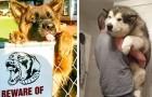 20 photos qui montrent que certains chiens resteront des éternels Peter Pan.