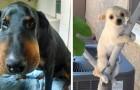 27 honden die zich realiseerden dat ze een slechte keuze hadden gemaakt