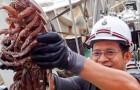 Eine Expedition hat die Meerestiefen Indonesiens erforscht und 12 tausend nie zuvor gesehene Kreaturen entdeckt