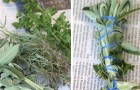 A natural repellent for mosquitoes! Here's how to create one with the herbs you have in your garden