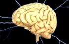 Zum ersten Mal ist es Wissenschaftlern gelungen, ein Gehirn außerhalb des Körpers am Leben zu halten