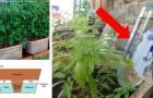 11 sistemas de irrigação que você pode fazer e que vão deixar os cuidados com o jardim mais fáceis