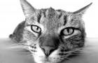 Les 10 bénéfices scientifiquement prouvés de vivre avec un chat