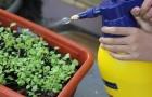 Das ökologische Insektizid auf Basis von Knoblauch, das Pflanzen vor Blattläusen schützt: So stellt ihr es her