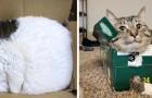 Plus de 20 photos de chats montrant qu'ils n'ont pas la moindre idée de ce qu'est un lit.