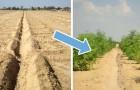 Rendre les sols désertiques fertiles sans produits chimiques : voici l'invention qui rend cela possible