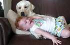 Chien et petite fille adorables