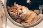 Enkele kattenfoto's die zo leuk zijn dat je er meteen één wilt adopteren