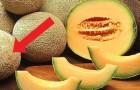 Hier zijn enkele nuttige tips om een rijpe en zoete meloen te kiezen