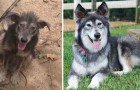 19 transformations of dogs before and after adoption that you will find hard to believe