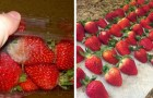 Do you want to make strawberries last longer? Here is the procedure to keep them fresh for days