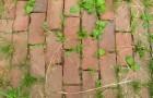 Les mauvaises herbes vous persécutent ? Une solution économique et moins invasive que les herbicides chimiques.