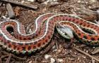 Video  Serpenti