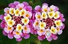 Har du en svart tumme? Här är 9 typer av växter som ger dig vackra blommor trots den brännande solen