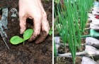Come costruire un orto anche in un metro quadrato di spazio ed ottenere il massimo