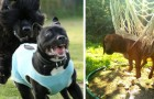 15 scenes of a day in the life a dog --- that we dare you not to laugh at!