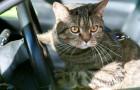 Scendono all'autogrill e lasciano il gatto in macchina: lui chiude le portiere e li lascia fuori