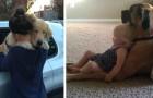 I cani ci insegnano ogni giorno cosa vuol dire amare incondizionatamente: ecco 17 foto irresistibili