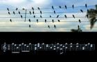 Un musicista trasforma in spartito gli uccelli sui cavi elettrici: la melodia che ne risulta è incantevole