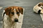Comment les Pays-Bas ont réussi à résoudre le problème des chiens errants