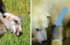 Il collaboratore di un bioparco ci svela 12 curiosità sugli animali: una più incredibile dell'altra!