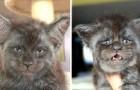 Ce chat au visage humain est la chose la plus étrange que vous verrez aujourd'hui : ses photos ont fait le tour du monde.