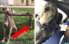 Dogs caught in exhilarating situations! Faced with these 26 photos, it is impossible not to laugh