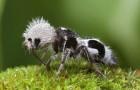15 animali stranissimi che sembrano usciti da un film di animazione