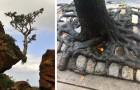 15 Bäume, die sich nicht um die Schwierigkeiten gekümmert haben, und die gegen alles und jeden weiter gewachsen sind