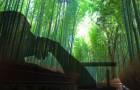 Die Fabel des Farns und Bambus, die Sie lesen sollten, wenn Sie eine harte Zeit haben