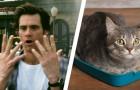 Een parasiet in kattenpoep stimuleert de ondernemingsgeest bij mensen die ermee worden besmet: hier het onderzoek