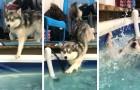 25 honden die zoveel grappige kunsten hebben uitgehaald dat hun baasjes niet boos konden worden