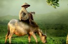 The farmer's parable is a Chinese story that we should all read before something bad happens
