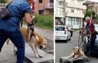 Ciò che fa quest'uomo OGNI GIORNO per il suo cane anziano vi toccherà nel profondo