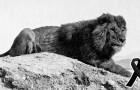 10 espèces animales fascinantes qui ont disparu au cours du siècle dernier, à cause des humains.