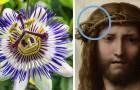 Passiflora: Hier ist die merkwürdige Symbolik, die diese Blume mit der Passion Christi verbindet