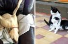 24 bilder av djur så bisarra att de kommer att få dig att skratta