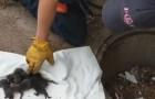 De brandweer redt pups die vastzitten in een put, maar dan ontdekken ze dat het niet om honden gaat