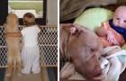 17 foto's van zeldzame tederheid die de prachtige vriendschap tussen kinderen en honden vertellen