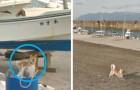 Die Arbeit von Google Street View wird von einem Hund sabotiert: er erscheint auf allen Fotos