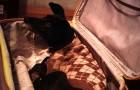 Hij brengt de hond verstopt in een koffer naar het ziekenhuis zodat zijn zieke vrouw haar voor de laatste keer kan knuffelen