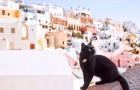 Un rifugio per animali cerca qualcuno che voglia vivere su una splendida isola greca insieme a 55 gatti