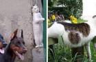 Deze 31 afbeeldingen zijn het bewijs dat je je met een kat in huis nooit verveelt