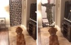 De soldaat keert naar huis en heeft een verrassing voor zijn hond: de grap eindigt op de mooist mogelijke manier