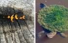 Dankzij deze 12 foto's krijg je de kans om enkele zeldzame dingen te zien van de wereld waarin we leven